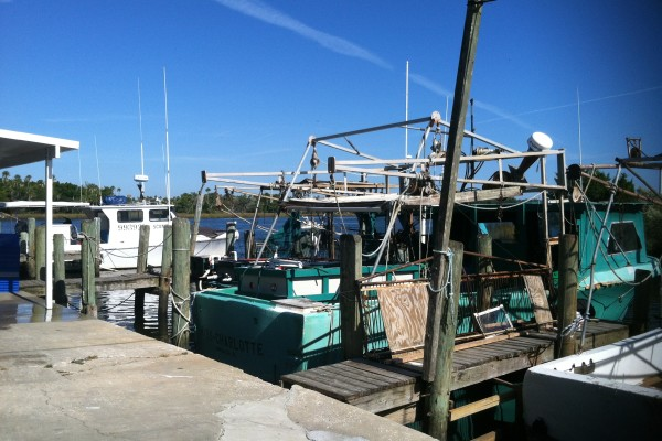 A visit to Shrimp Landing in Crystal River: what ideas will this bring?