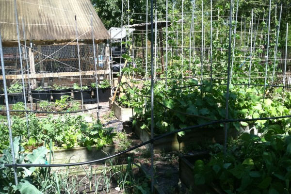 The garden, summer 2013