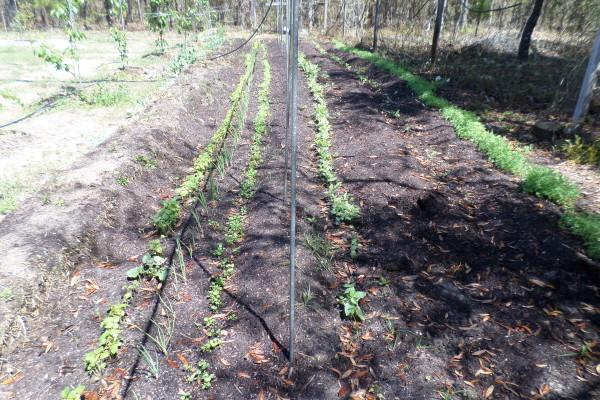 back garden sprouting